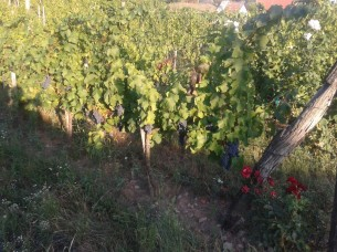 Sun setting on Turán the day before harvest.