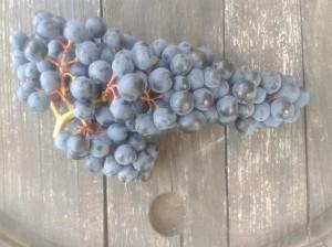 Turán grape cluster.
