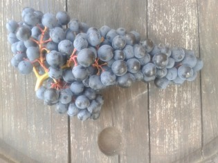 Turán grape cluster.