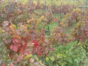 Autumn colors of Turán.