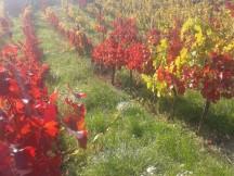 Autumn Turán and Pinot Gris.