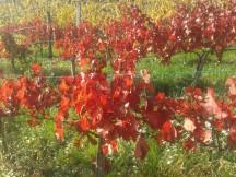 Autumn Turán.