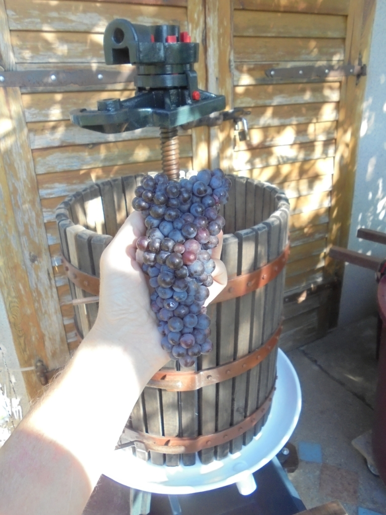 Pinot Gris cluster and press