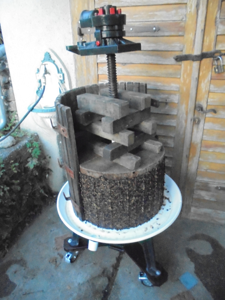 Pinot Gris grapes after pressing