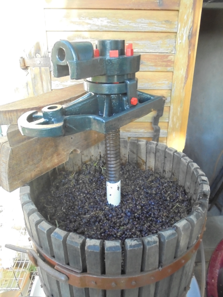 Press filled with grapes before pressing